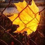 Autumn mood jesie slonce dzie szczescie liscie pogoda pazdziernik autumnhellip