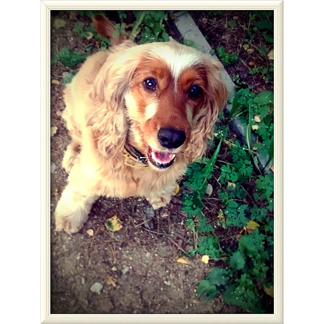 Sami #dog #walkwithdog #saturdaymood #instpicture