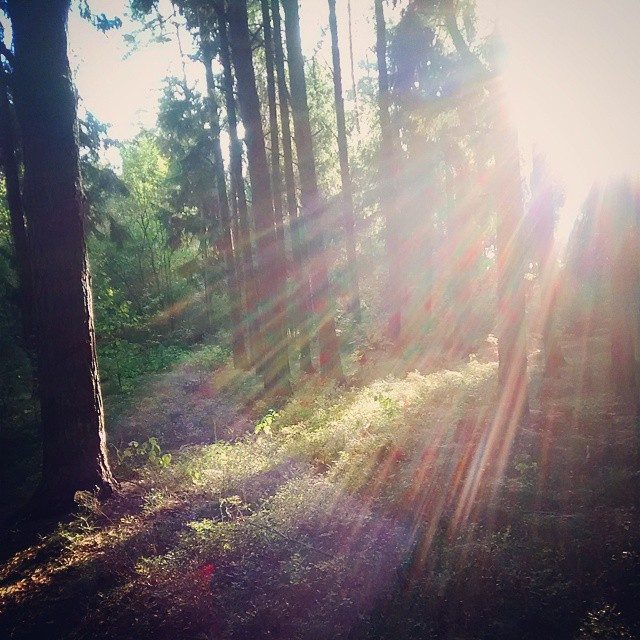 O poranku #sunrise #nature #wood