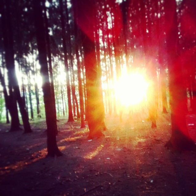 #sunset #wood #nature #enjoliving #evening