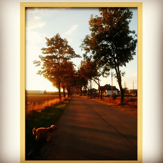 Walk with me #instpicture #nature #sunset #walk