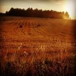 Ostatnie dni sierpnia sierpie lato wieczr widok natura zachodslonca chillhellip