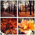 Niedzielne popoludnie :) i love sunday #sunday #autumn #nature #picture