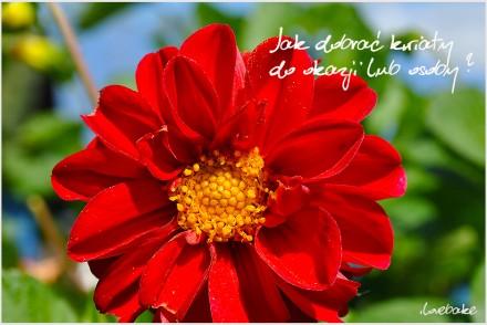 jak-dobrac-kwiaty-do-okazji-lub-osoby