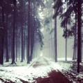 Sunday #weekend #forest #winter