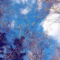 Poranek #morning #sky #blue #spring #nature #poranek #niebo #niebieskie