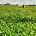 Popoludniowy spacer #nature #walk #dog #green #grass #spacer #wiosna #trawa
