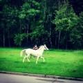 Taki widok niecodzienny ?? #kon #zwierzeta #natura #widok #beauty #good #mood #spacer #horse #walking #nature #relax #chillout #live #love