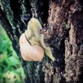 Powoli do celu ? #slimak #natura #cel #sciezka #snail #nature #tree #view #slow #life #day #photonature #wild #world