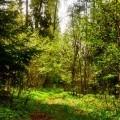 Las na wiosne ☺  #las #wiosna #slonce #natura #relax #zycie #budzisie #forest #country #poland #spring #green #chill #out #wypoczynek #time #slow