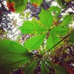 jesien slonce drzewa slonecznydzien zielono natura pieknie dziendobry nature autumnhellip